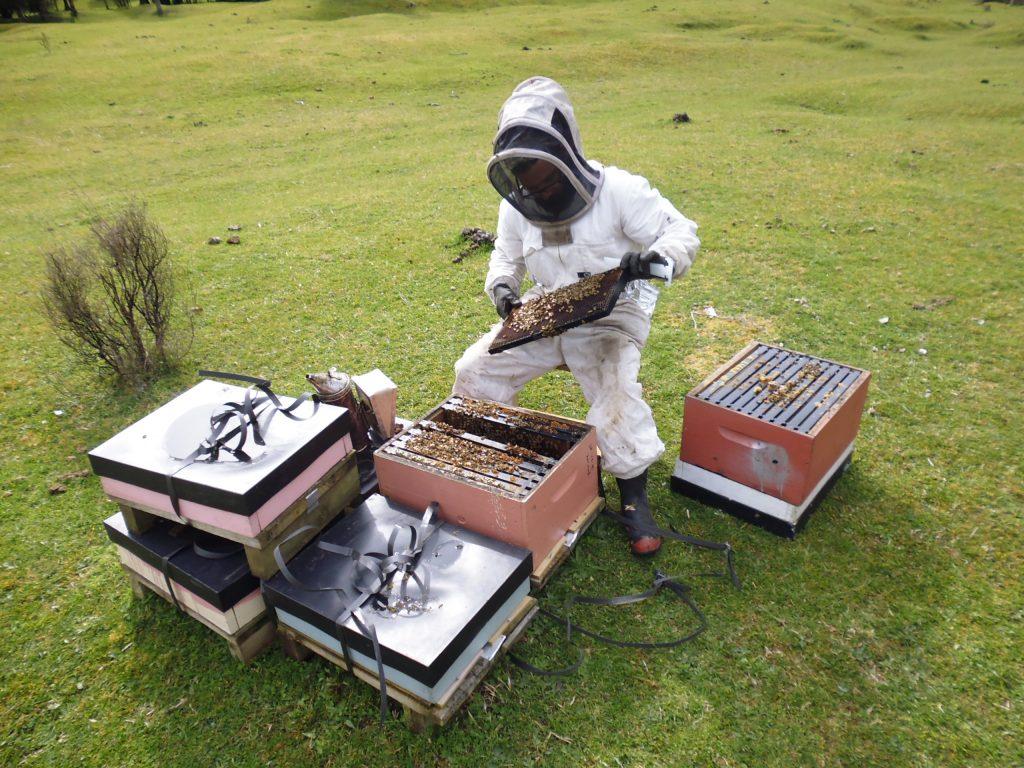 Manawa Honey NZ Beekeeper Checking Hives Down Whakatane River, Ruatahuna, Te Urewera, New Zealand