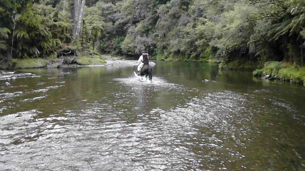 Manawa Honey NZ Beekeeper Riding Horse Through River To Check Hives Downriver In Ruatahuna, Te Urewera, New Zealand