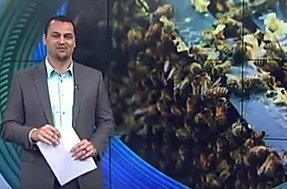 Manawa Honey Nz Bees Maori Television