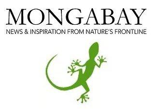 Manawa Honey Nz Mongabay Article