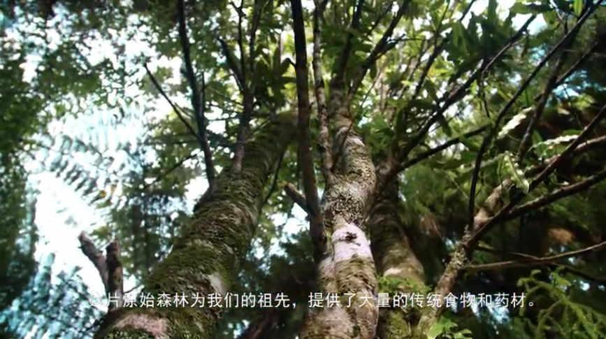 Manawa Honey Nz Story Video Cover