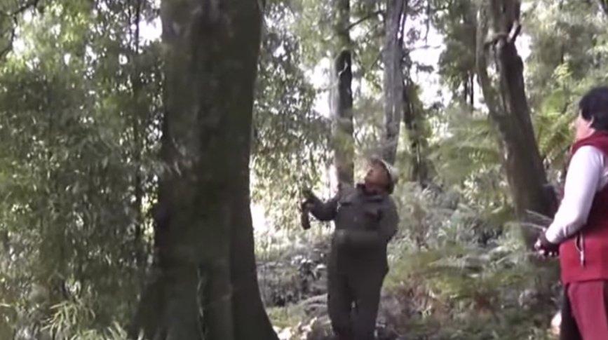 Old Man Explaining How Ancestors Gathered Wild Honey In Te Urewera, New Zealand
